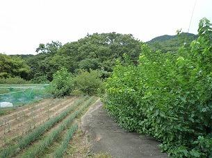 周辺の農村1.jpg