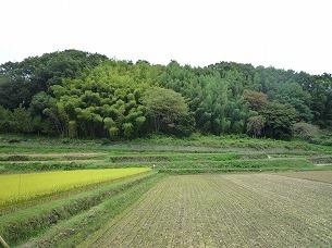 周辺の農村6.jpg