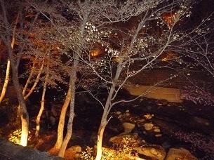 夜の渓流の湯から.jpg