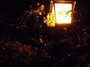 夜の街燈.jpg