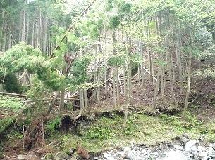 大森山の崩れ1.jpg