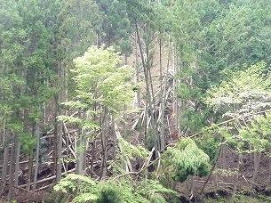 大森山の崩れ2.jpg