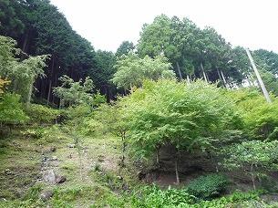 大森山斜面1.jpg