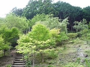 大森山斜面2.jpg