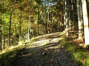 山之神への道1.jpg
