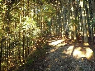 山之神への道2.jpg