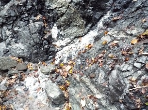 岩からにじみ出ている3.jpg