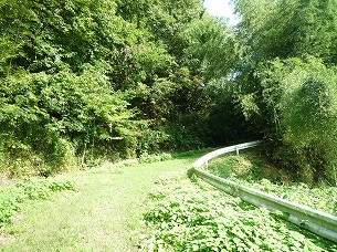 林道に入る2.jpg
