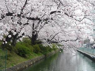 桜とお堀1.jpg
