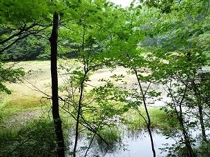 池を望む.jpg