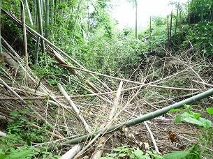 空壕に倒壊する竹1.jpg