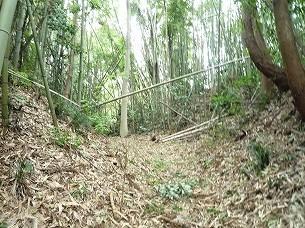 空壕に倒壊する竹4(マシな方).jpg