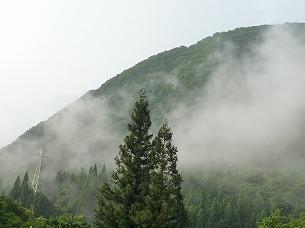 雨上がりの霧5.jpg