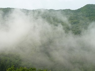 雨上がりの霧6.jpg