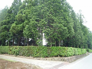 鬱蒼とした木々の屋敷.jpg