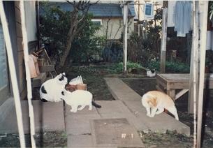 ネコたち1.jpg