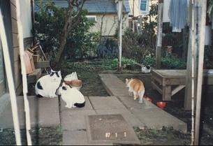 ネコたち2.jpg
