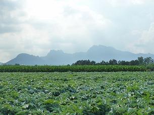 中野谷から見た妙義山.jpg