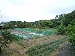 周辺の農村2.jpg