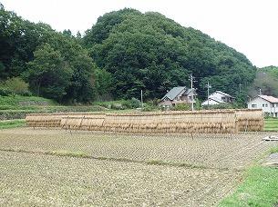 周辺の農村5.jpg