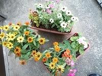 女史の支店前の花壇1.jpg