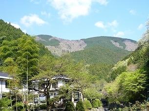 御殿山の山林.jpg