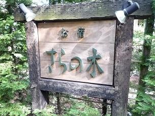 朝のさらの木5.jpg