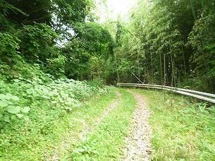 林道2.jpg
