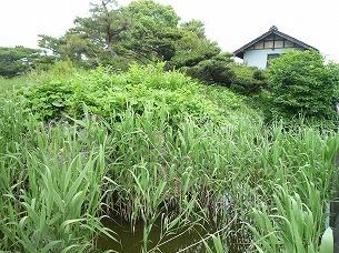 水堀(草で見えない1).jpg