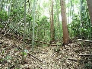空壕に倒壊する竹3.jpg