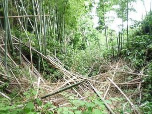 空壕に崩壊する竹5.jpg