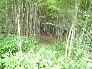 竹藪に踏み込む.jpg