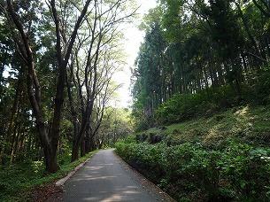 舗装された山道.jpg