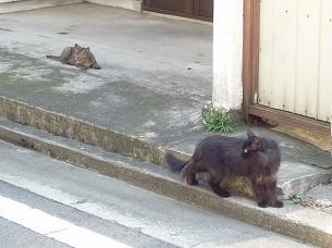 親子猫2.jpg