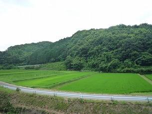 護られた村々4.jpg