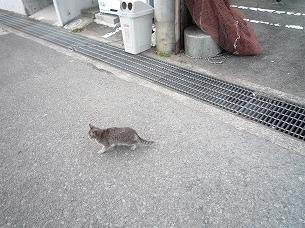 雑賀港の猫2.jpg